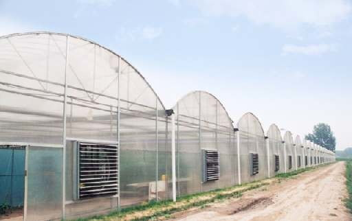 applications/greenhouses/commercial-greenhouse-7.jpg
